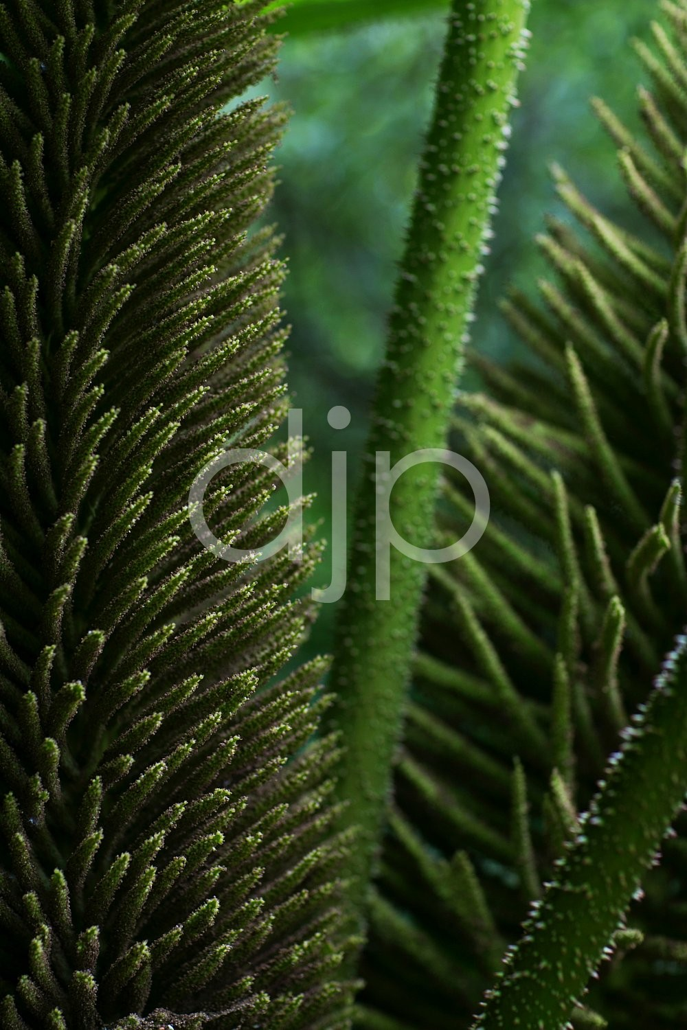 D Jones Photography, McMenamins Edgefield, djonesphoto, gardens, green, oregon, abstract