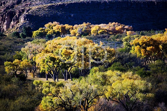 D Jones Photography, big bend national park, brown, djonesphoto, green, hiking, yellow, Big Bend