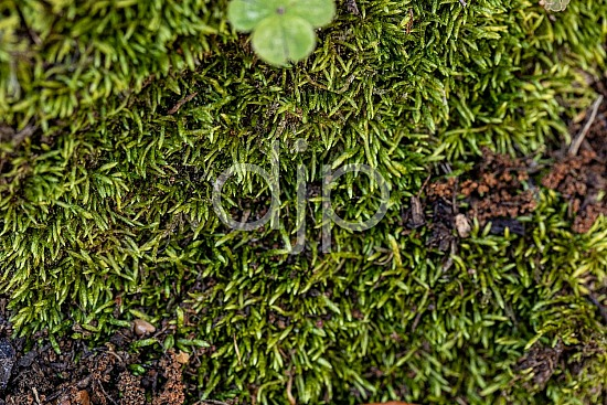 D Jones Photography, Sugar Land, djonesphoto, excursions with djp, green, macro, moss, personal, quarantine, textures, abstract