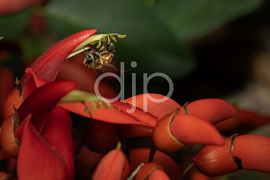 D Jones Photography, Sugar Land, djonesphoto, excursions with djp, flower, flowers, macro, personal, quarantine, red, bees