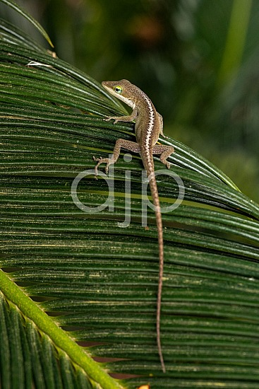 Sugar Land, djonesphoto, excursions with djp, lizard, macro, personal, quarantine, sago palm, D Jones Photography