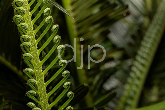 Sugar Land, djonesphoto, excursions with djp, flash, green, macro, personal, quarantine, sago palm, textures, D Jones Photography