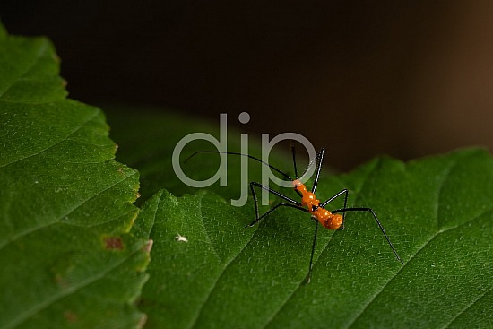 D Jones Photography, Sugar Land, black, bugs, djonesphoto, excursions with djp, macro, orange, personal, quarantine, assassin bug