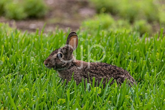 D Jones Photography, Sugar Land, djonesphoto, excursions with djp, green, personal, quarantine, rabbit, brown