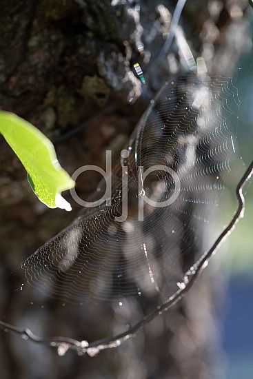 Sugar Land, djonesphoto, excursions with djp, macro, personal, quarantine, spiderweb, D Jones Photography