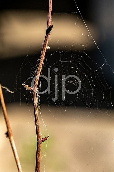 D Jones Photography, Sugar Land, djonesphoto, excursions with djp, macro, personal, quarantine, spider web, textures, abstract
