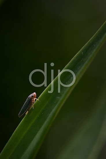 D Jones Photography, Sugar Land, djonesphoto, excursions with djp, green, macro, personal, quarantine, bugs