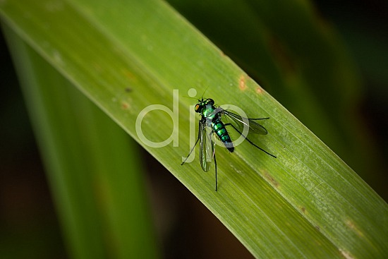 D Jones Photography, Sugar Land, djonesphoto, excursions with djp, fly, green, macro, orange, personal, quarantine, black
