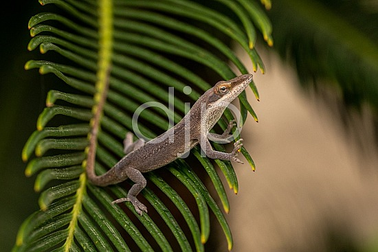 Sugar Land, djonesphoto, excursions with djp, lizard, personal, quarantine, sago palm, D Jones Photography