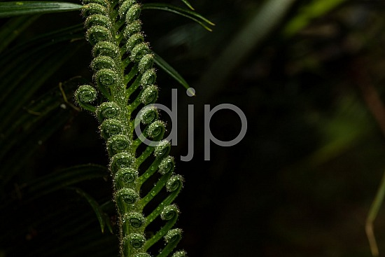 Sugar Land, djonesphoto, excursions with djp, green, macro, personal, quarantine, sago palm, D Jones Photography