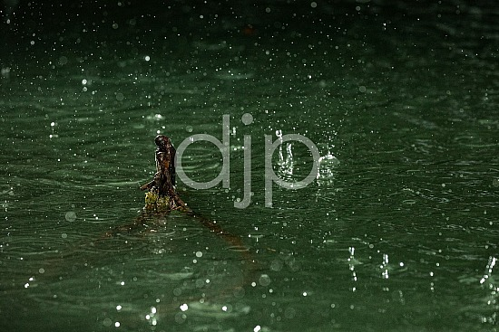 Sugar Land, djonesphoto, droplets, excursions with djp, green, high speed flash, personal, quarantine, rain, D Jones Photography