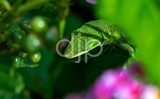 D Jones Photography, djonesphoto, flowers, ladybug, lizard, macro, personal