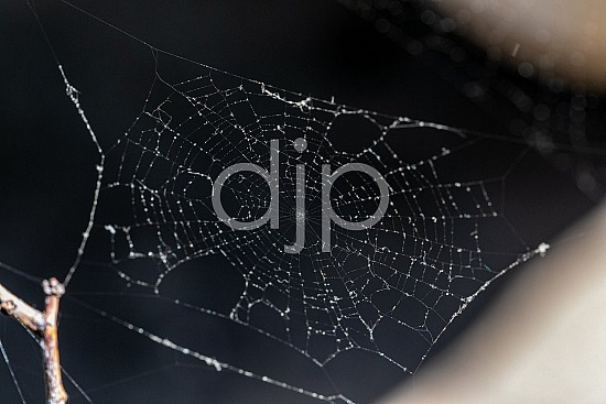 D Jones Photography, Sugar Land, djonesphoto, excursions with djp, macro, personal, quarantine, spiderweb, textures, abstract