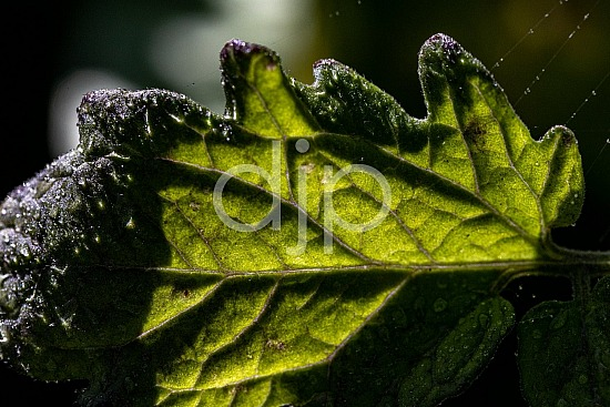 D Jones Photography, Sugar Land, djonesphoto, excursions with djp, green, macro, personal, quarantine, textures, abstract
