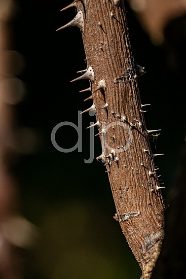 D Jones Photography, Sugar Land, brown, djonesphoto, excursions with djp, macro, personal, quarantine, textures, abstract
