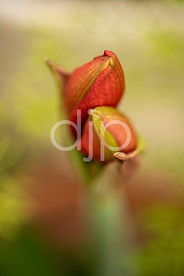 D Jones Photography, djonesphoto, flowers, macro, personal