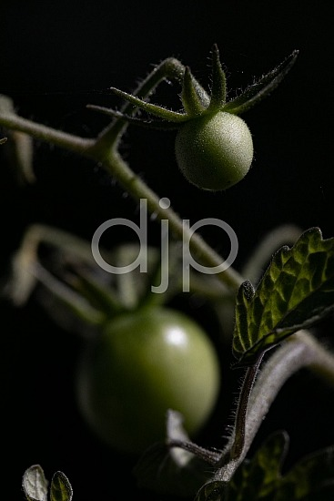 Sugar Land, djonesphoto, excursions with djp, macro, personal, quarantine, textures, tomatoes, D Jones Photography