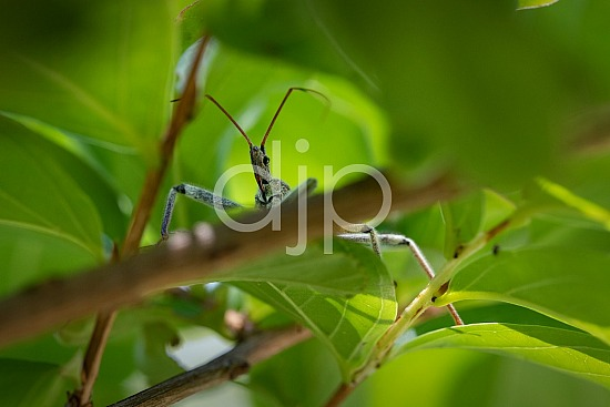 D Jones Photography, Sugar Land, bugs, djonesphoto, excursions with djp, macro, personal, quarantine, assassin bug