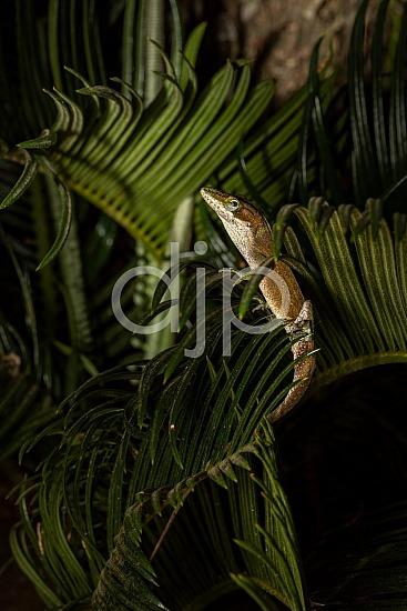 D Jones Photography, Sugar Land, djonesphoto, excursions with djp, flash, green, lizard, macro, personal, quarantine, sago palm, textures, brown