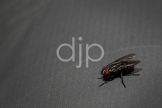D Jones Photography, Sugar Land, djonesphoto, excursions with djp, fly, macro, personal, quarantine, red, black
