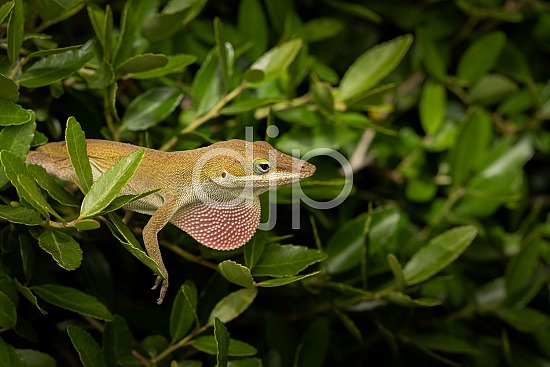 Sugar Land, djonesphoto, excursions with djp, lizard, macro, personal, quarantine, D Jones Photography