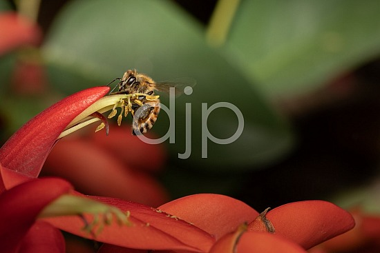 D Jones Photography, Sugar Land, djonesphoto, excursions with djp, macro, personal, quarantine, red, yellow, bees