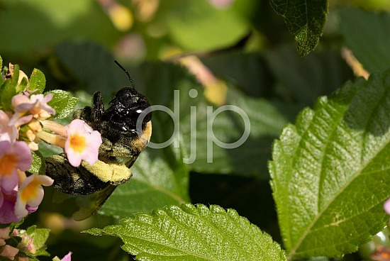 D Jones Photography, bees, djonesphoto, flowers, macro, personal