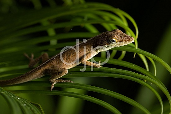 D Jones Photography, Sugar Land, djonesphoto, excursions with djp, green, lizard, macro, personal, quarantine, sago palm, brown