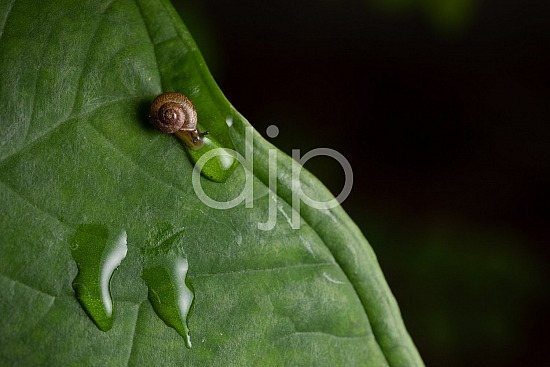 D Jones Photography, Sugar Land, djonesphoto, excursions with djp, green, macro, personal, quarantine, snail, brown