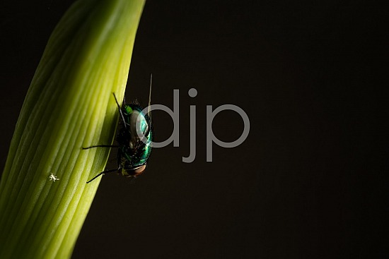 D Jones Photography, Sugar Land, djonesphoto, excursions with djp, fly, green, macro, personal, quarantine, red, black