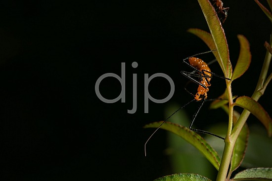D Jones Photography, Sugar Land, assassin bug, black, djonesphoto, excursions with djp, fly, macro, orange, personal, quarantine