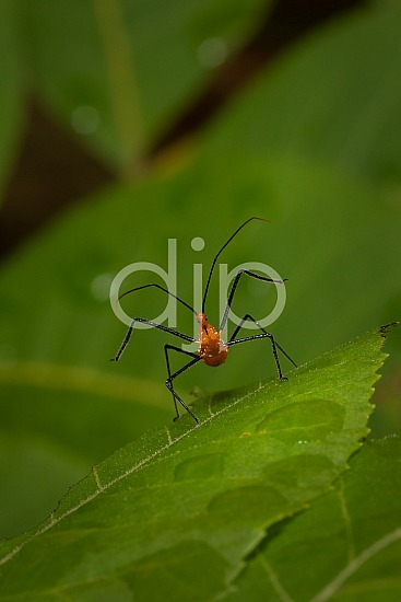 D Jones Photography, Sugar Land, black, djonesphoto, excursions with djp, green, macro, orange, personal, quarantine, assassin bug
