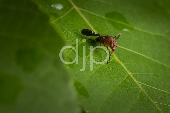 D Jones Photography, Sugar Land, bugs, djonesphoto, excursions with djp, fly, green, macro, personal, quarantine, brown