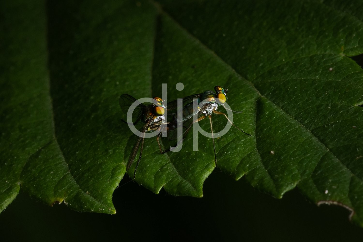 Sugar Land, djonesphoto, excursions with djp, fly, green, macro, personal, quarantine, yellow, D Jones Photography