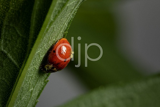Sugar Land, djonesphoto, excursions with djp, green, ladybug, macro, personal, quarantine, red, D Jones Photography