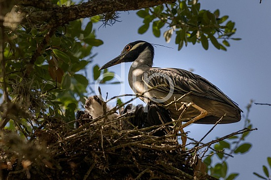 D Jones Photography, Sugar Land, birds, blue heron, djonesphoto, excursions with djp, personal, quarantine