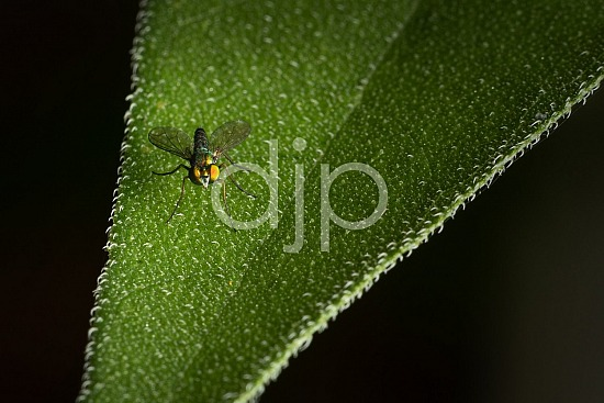 Sugar Land, djonesphoto, excursions with djp, fly, green, macro, personal, quarantine, D Jones Photography