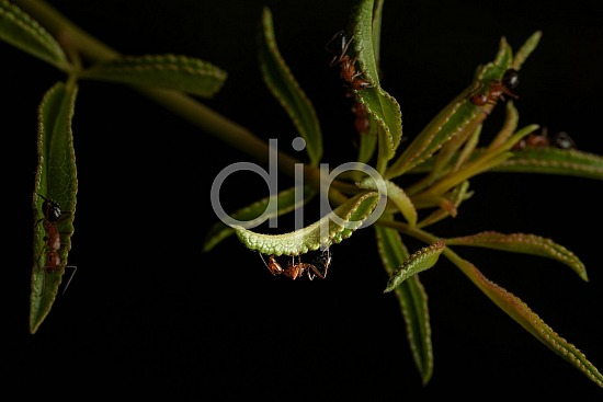 D Jones Photography, Sugar Land, black, djonesphoto, excursions with djp, macro, orange, personal, quarantine, ants