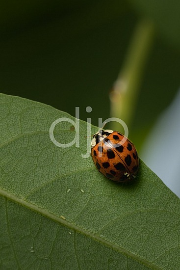 D Jones Photography, Sugar Land, djonesphoto, excursions with djp, green, ladybug, macro, personal, quarantine, red, black
