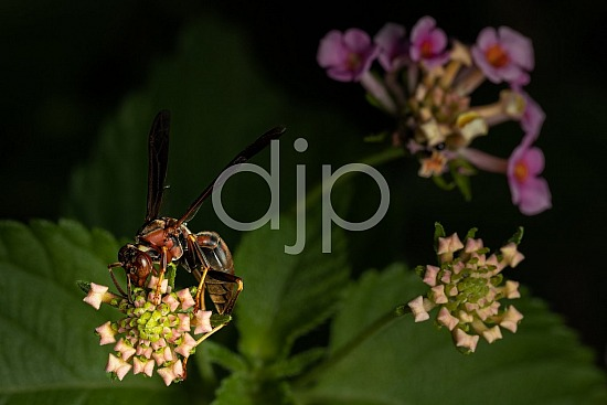D Jones Photography, Sugar Land, djonesphoto, excursions with djp, macro, orange, personal, quarantine, red, wasp, yellow, black