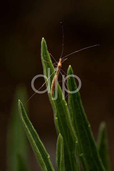D Jones Photography, Sugar Land, bugs, djonesphoto, excursions with djp, green, macro, personal, quarantine, brown