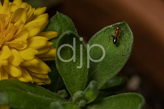 D Jones Photography, Sugar Land, black, djonesphoto, excursions with djp, green, macro, orange, personal, quarantine, yellow, ants