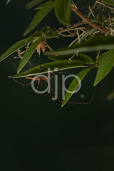 D Jones Photography, Sugar Land, djonesphoto, excursions with djp, macro, personal, quarantine, spider, spiderweb, brown