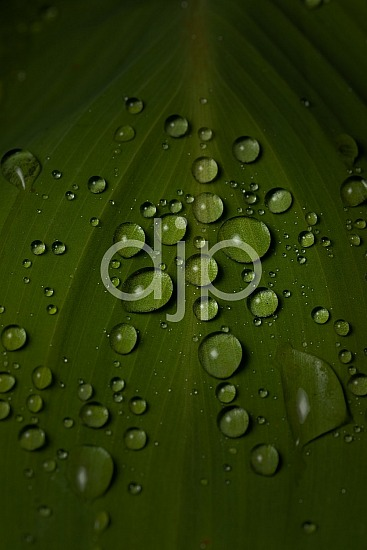 Sugar Land, djonesphoto, droplets, excursions with djp, green, leaf, macro, personal, quarantine, D Jones Photography