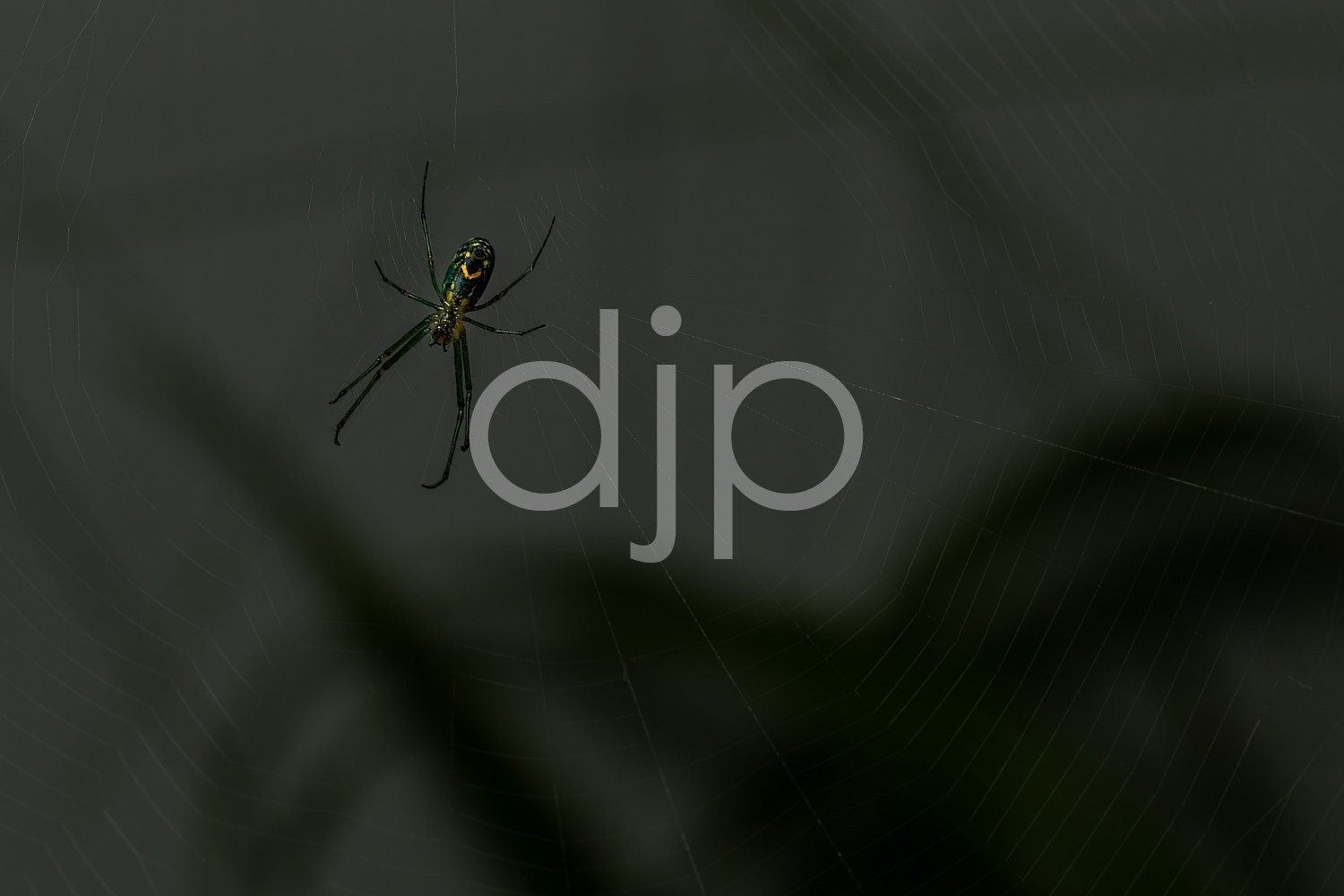 D Jones Photography, Sugar Land, djonesphoto, excursions with djp, green, macro, personal, quarantine, spider, spiderweb, yellow, black