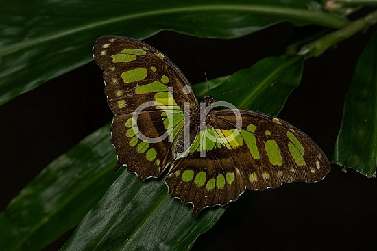 Butterfly Exhibit, D Jones Photography, HMNS, Houston Museum of Natural Science, butterfly, djonesphoto, green, macro, quarantine, yellow, brown