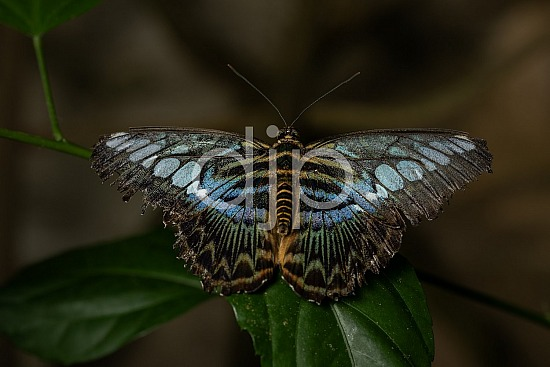 Butterfly Exhibit, D Jones Photography, HMNS, Houston Museum of Natural Science, blue, brown, butterfly, djonesphoto, green, macro, quarantine, yellow, black