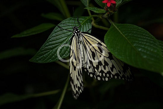 Butterfly Exhibit, D Jones Photography, HMNS, Houston Museum of Natural Science, butterfly, djonesphoto, macro, quarantine, white, black