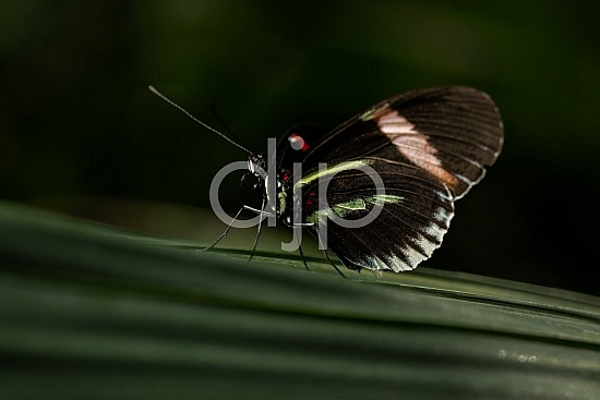 Butterfly Exhibit, D Jones Photography, HMNS, Houston Museum of Natural Science, brown, butterfly, djonesphoto, green, macro, quarantine, red, white, black