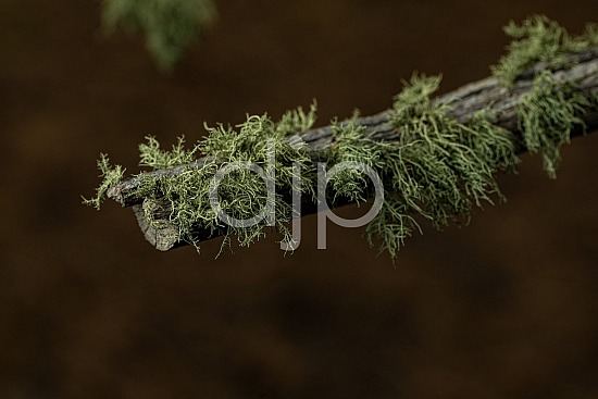 D Jones Photography, New Mexico, Santa Fe National Forest, djonesphoto, excursions with djp, green, macro, moss, nm, quarantine, brown
